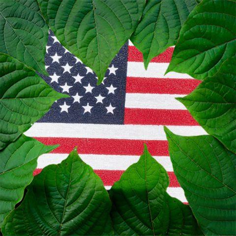 Kratom in America