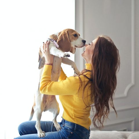 Kratom Test on Beagles
