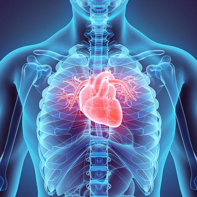 Kratom Effects the heart
