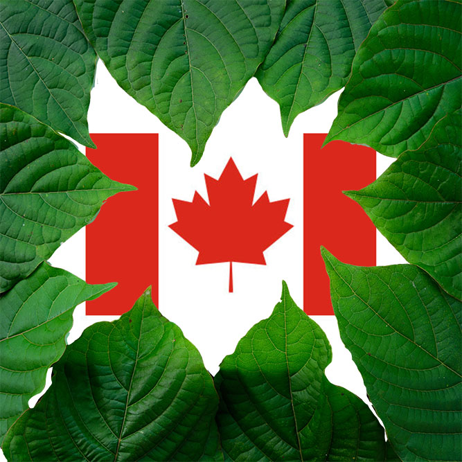 Kratom Leaves with Canadian Flag