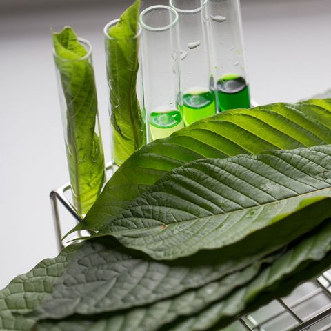A stack of fresh kratom leaves sitting next to a series of vials filled with a liquid kratom extract for testing.