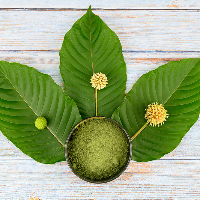 Three kratom leaves laying on a white table with a bowl of powdered kratom and their flower